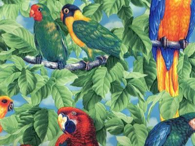 صور  جميلة  للببغاء Parrots